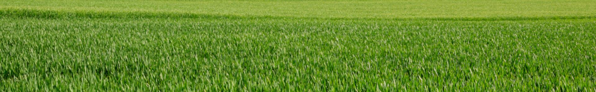 Green grasses in Bourgogne, France.